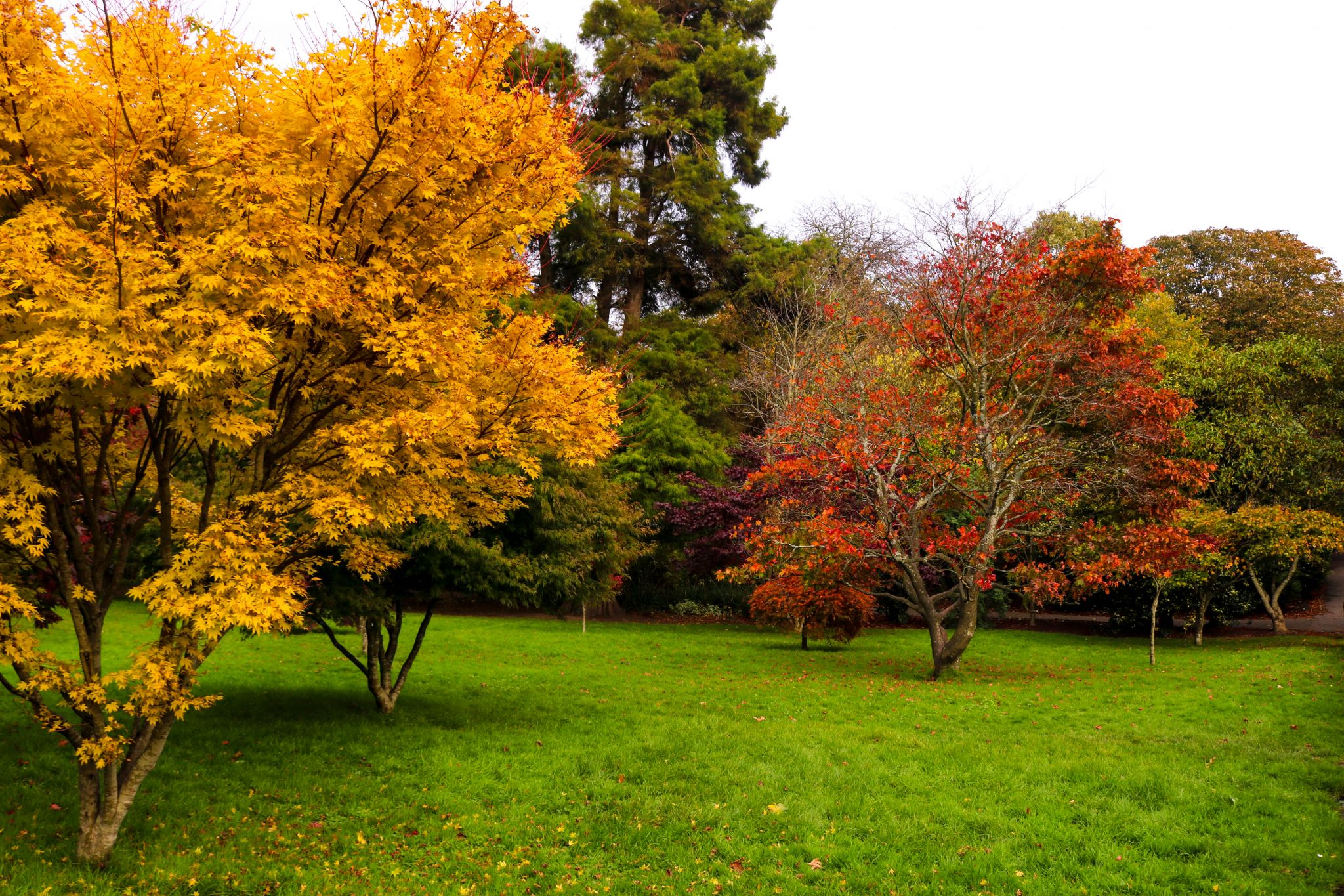 Autumn in Cardiff - photos to inspire you to get outside